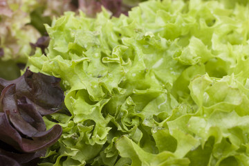 close-up photo of fresh lettuce leaves