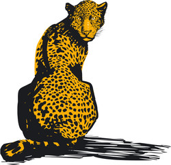 Leopard, vector illustration
