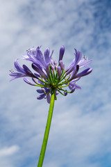 purple flower with sky at background