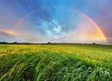 """Постер, картина, фотообои """"Rainbow over spring field"""""""