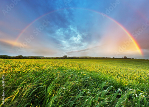 Deurstickers Weide, Moeras Rainbow over spring field
