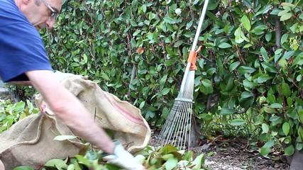 uomo che raccoglie le foglie