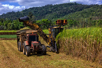 Sugar cane farming in Queensland