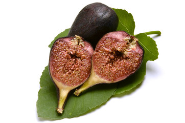 Ficus carica تين معروف Инжир Fikon Common fig Echte Feige