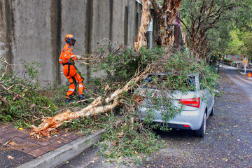 Sydney SES volunteer clears fallen branches after mini-tornado