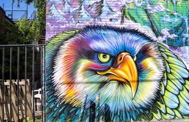 Oiseau de rue © alexanephoto