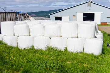 White plastic bales of hay