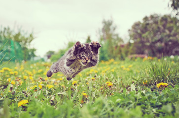 Kitten is jumping