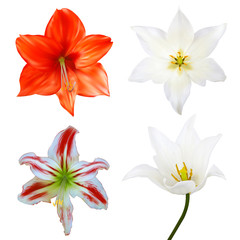 Set of flowers. Photo-realistic Vector illustration. Isolated on