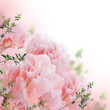 Floral background of roses and lilies, wild flowers