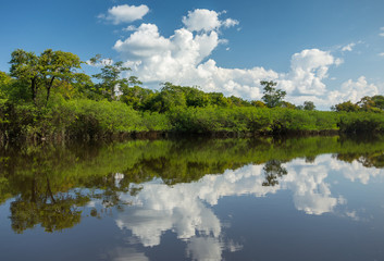 Beautiful Reflection of the Amazon Jungle on Water