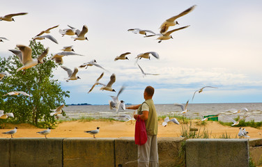 man feeding seagulls  at the seaside