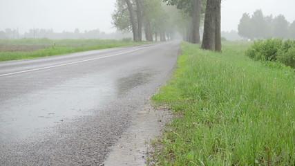 water rain drops fall on asphalt road between trees