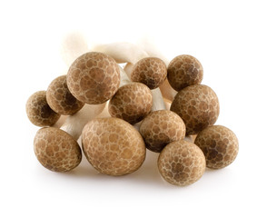 Brown beech mushrooms, Shimeji mushroom, Edible mushroom isolate