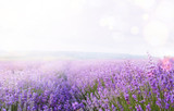 Fototapety Flower field and sky.