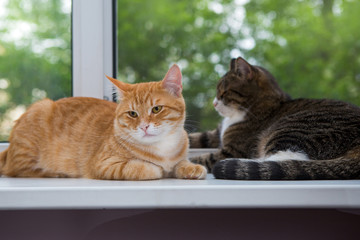 Two cat sitting on the window sill