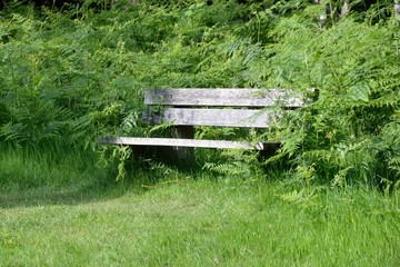 Wooden bench amongst greenery