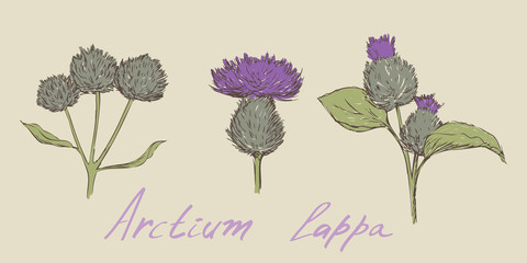 burdock hand drawn set vector