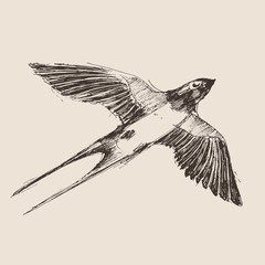 swallow bird hand drawn vintage engraved illustration, sketch