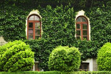 Окна в зелени