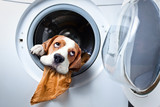 Dog after washing