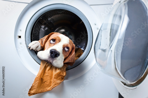 Dog after washing - 66610852