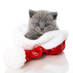 Kätzchen in Nikolausmütze