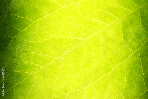 Greed Leaf Texture Closeup