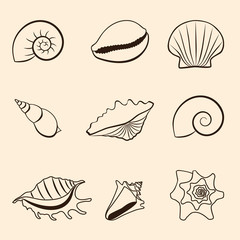 Seashells vector pattern