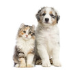 Kitten and puppy sitting, isolated on white