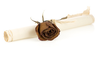 Old rolled  paper with rose flower isolated on white background