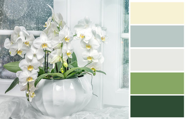 Background with white orchid   with complimentary swatches.
