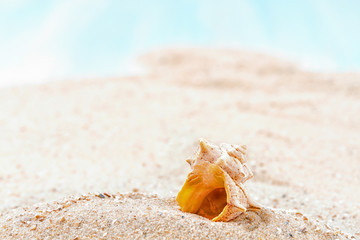 Shells  on sandy beach