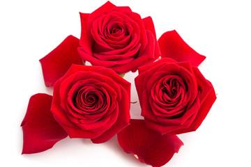 Drei Rosenblüten und Blütenbätter
