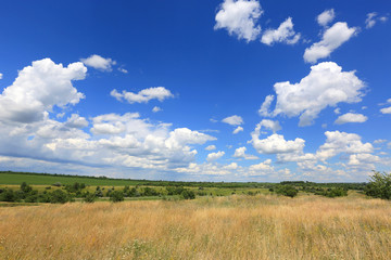 wild meadow in steppe