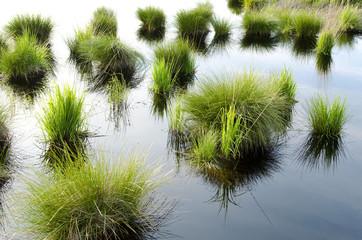 Moorlandschaft im Hohen Venn (Belgien)