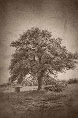 Grunge textured collage - Oak tree