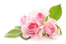 "Постер, картина, фотообои ""Pink Roses"""