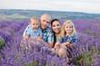 family in lavender field