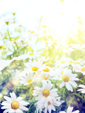 Art high light; Bright summer flowers Natural background