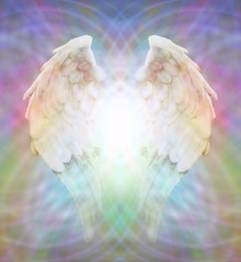 Angel Wings on multicolored matrix web