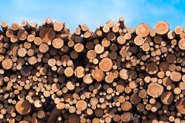 Kiefernholz, Holzindustrie, Baumstämme, Festmeter