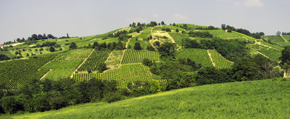 Oltrepo Pavese vineyards panorama