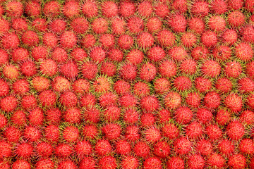 Tropical Fruits Rambutan