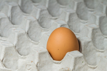 Egg in carton box