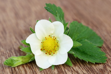 Strawberry flower with leaves
