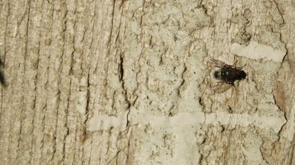 Fly on tree