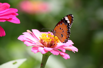 lovely butterfly with flower