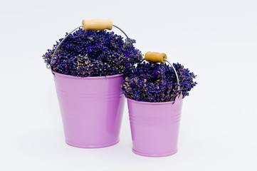 Lavender flower in two purple bucket