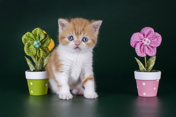 little kitten in flowers